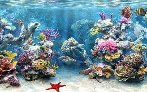 Cảnh sinh vật đại dương khi trải nghiệm tour đi bộ dưới biển